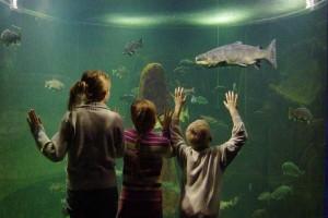 Котка # Маретариум – выставочный аквариум в Котке-pic02