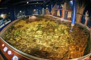 Котка # Маретариум – выставочный аквариум в Котке-pic03