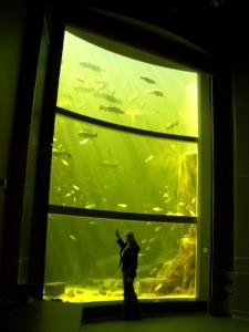 Котка # Маретариум – выставочный аквариум в Котке-pic06